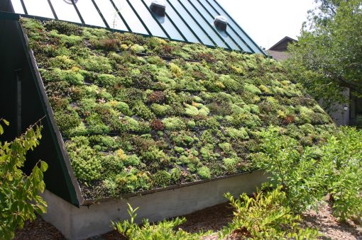 """Зелените"" покриви – практични и красиви"